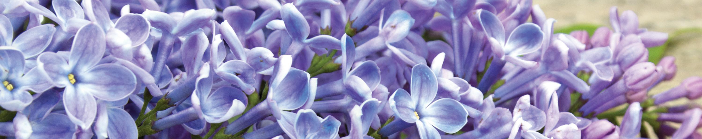 amazon-floral-3000x600.jpg
